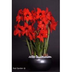 Red Garden®